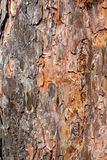 Tree bark. Photo of a bark of a tree made at a short distance Stock Images