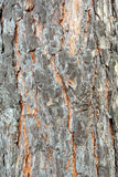 Tree bark. Photo of a bark of a tree made at a short distance Royalty Free Stock Images