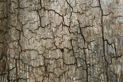 Tree bark. Close up Stock Image