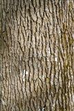 Tree Bark Abstract Royalty Free Stock Images