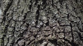 Tree bark along the trunk stock video footage