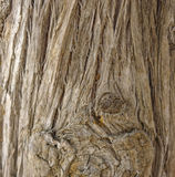 Tree bark as a background close-up macro Royalty Free Stock Photos