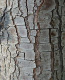 Tree bark as a background close-up macro Royalty Free Stock Photography