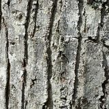Tree Bark  As Background Royalty Free Stock Photo