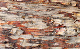 Tree bark as a texture background Stock Photos
