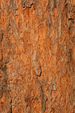Tree bark background Royalty Free Stock Photography