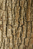 Tree bark background. Stock Photography