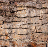 Bark of tree texture. Tree bark in the background royalty free stock photography