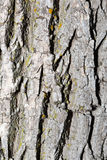 Tree Bark Background. Royalty Free Stock Photos
