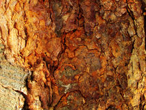 Free Tree Bark Background Stock Images - 8966374