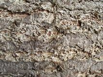 Tree bark background. Stock Image