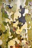 Tree bark background Royalty Free Stock Images