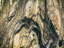 Tree Bark background. Close up of a tree bark Stock Photography