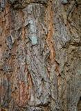 Tree bark background. Close up bark background texture Royalty Free Stock Photos