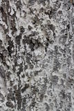 Tree bark background Royalty Free Stock Photo