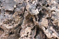 Tree bark background Royalty Free Stock Photography