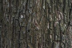 Tree bark background. Background of bark of dry, deciduous tree Stock Photos