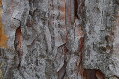Tree bark background Stock Photo