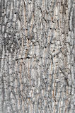 Tree bark background. Old wood texture Royalty Free Stock Photos