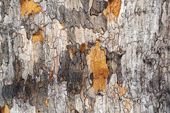 Tree bark background. Old wood texture Stock Image