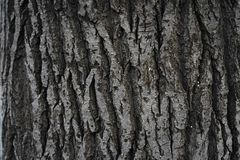 Tree bark, background. Old Wood Tree Texture Background Pattern