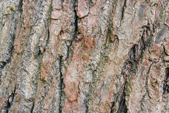 Tree bark background Royalty Free Stock Photos