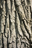 Tree bark background. And shadows Stock Images