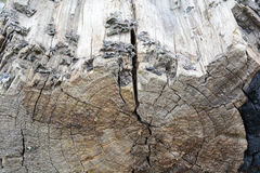 Tree bark in the background Royalty Free Stock Photos