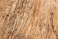 Tree bark background Stock Images