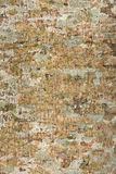 Tree bark background and texture Royalty Free Stock Image
