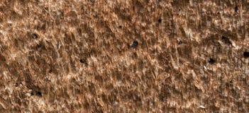 Tree bark background texture pattern Stock Image