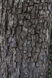 Tree bark background texture. Real wooden tree bark. Dark natural tree bark pattern. Wooden pattern. Real organic wood texture. royalty free stock photography