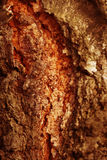 Tree Bark Background Royalty Free Stock Images