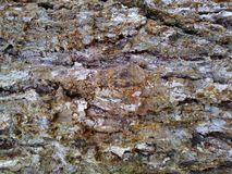 Tree Bark Background Texture. Very textured background of tree bark royalty free stock images