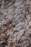 Tree bark background. Old bark. 100 year Royalty Free Stock Image