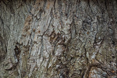 Tree Bark Background Vertikal Royalty Free Stock Image