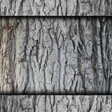 Tree, bark background wall abstract stone texture Stock Photo