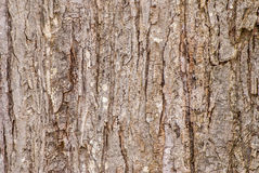 Tree Bark Background Stock Image