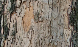Tree bark background. Wooden brown and grey backgound - tree bark material Stock Photos