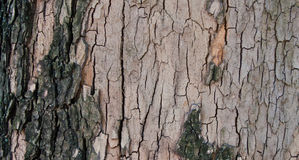 Tree bark background. Wooden brown and grey backgound - tree bark material Royalty Free Stock Photo