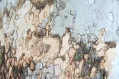 Tree bark background. Wooden brown background - tree bark material Royalty Free Stock Photos
