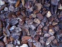 Tree bark, bark photo, bark background, bark macro, forest tree, Stock Photography
