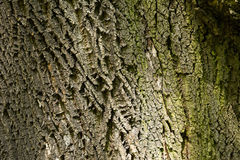 Tree bark. Beautiful nature background - tree bark Stock Photos