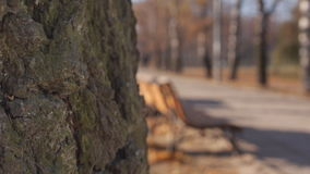A tree bark and bench autumn stock footage