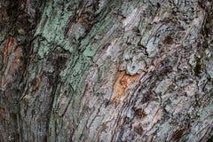 Tree bark bent wave texture closeup Stock Images