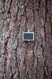 tree bark and blackboard Royalty Free Stock Images