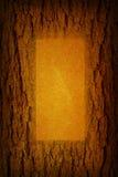 Tree bark and blank frame Stock Photo