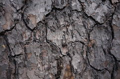 Brown grey tree bark pattern. Brown bark pattern on tree Stock Images