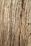 Tree Bark Royalty Free Stock Photo