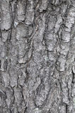 Tree bark of a chestnut texture background.  Royalty Free Stock Photos